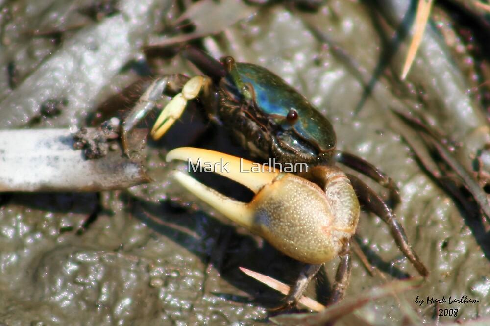 The Fiddler Crab by Mark  Larlham