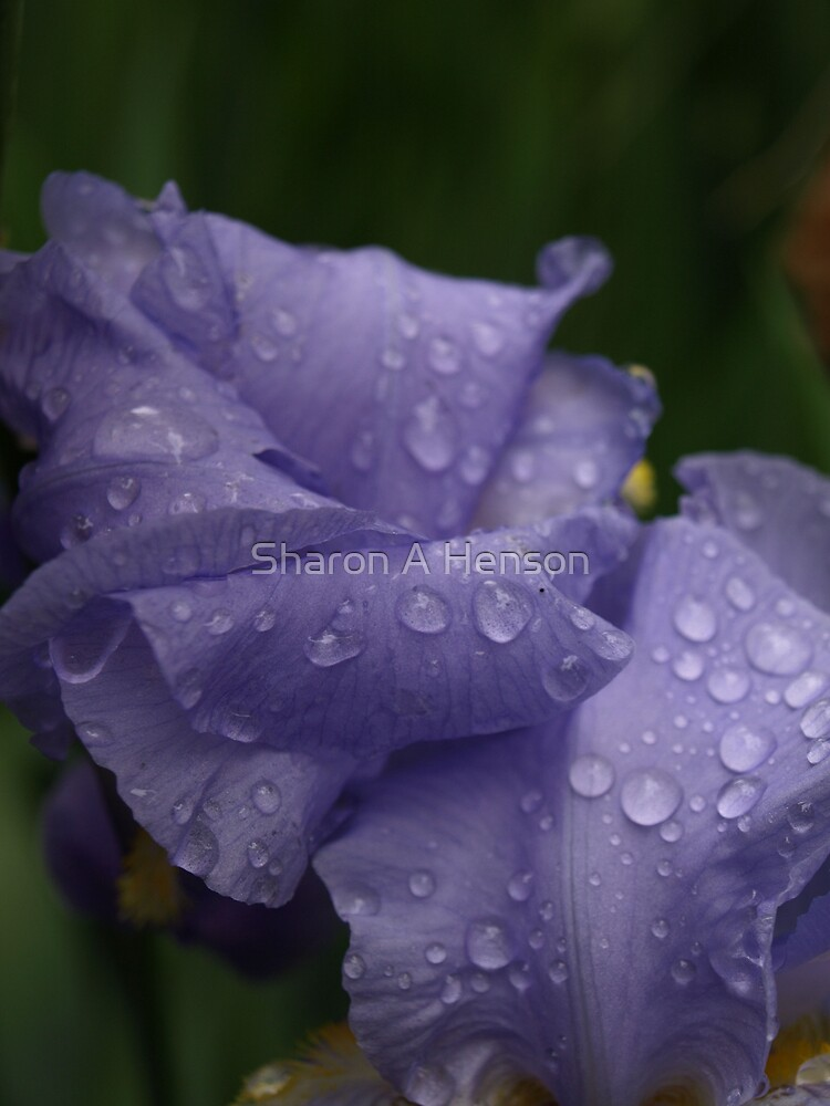 AFTER THE RAIN III by Sharon A. Henson