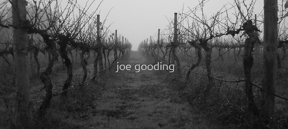 foggy vineyard by joe gooding