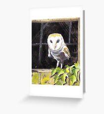 Barn Owl in a window Greeting Card