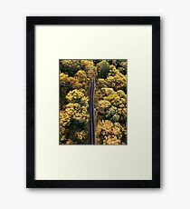 driving through the forest in australia Framed Print