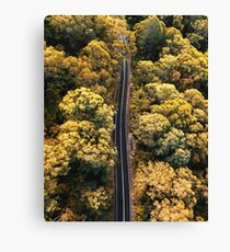 driving through the forest in australia Canvas Print