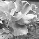 A Black & White Beauty by Charldia