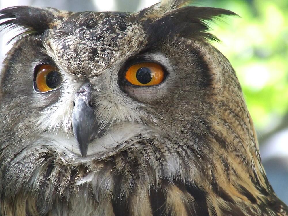 orange eyes hypnotize by lookslikerain