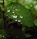 Drops of Rain by lindsycarranza