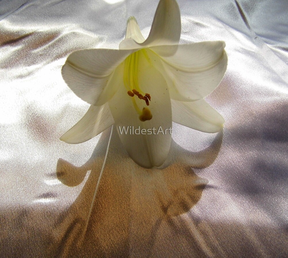 Still Life  In White by WildestArt