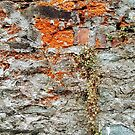 Wall Weeds With Rust  by Fara
