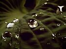 Drops Like Crystal by lindsycarranza