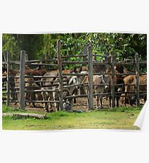 Mules in a Holding Pen Poster