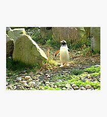 The Pinguin... Photographic Print