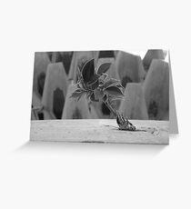Concrete Jungle Greeting Card
