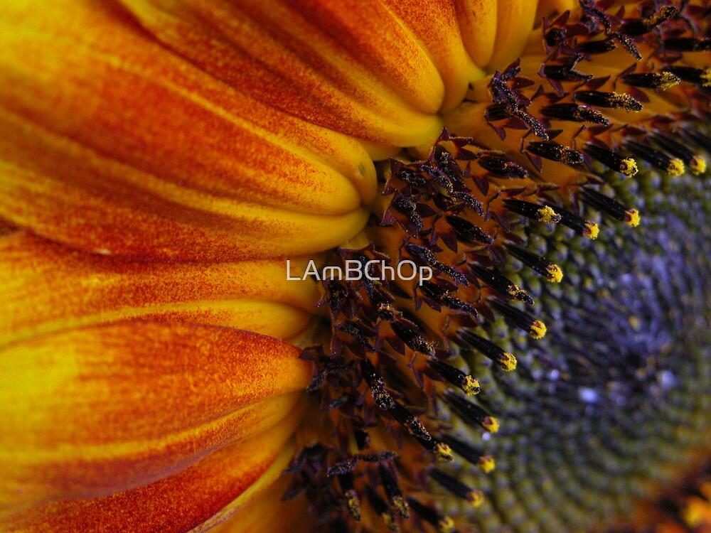SunnySide by LAmBChOp