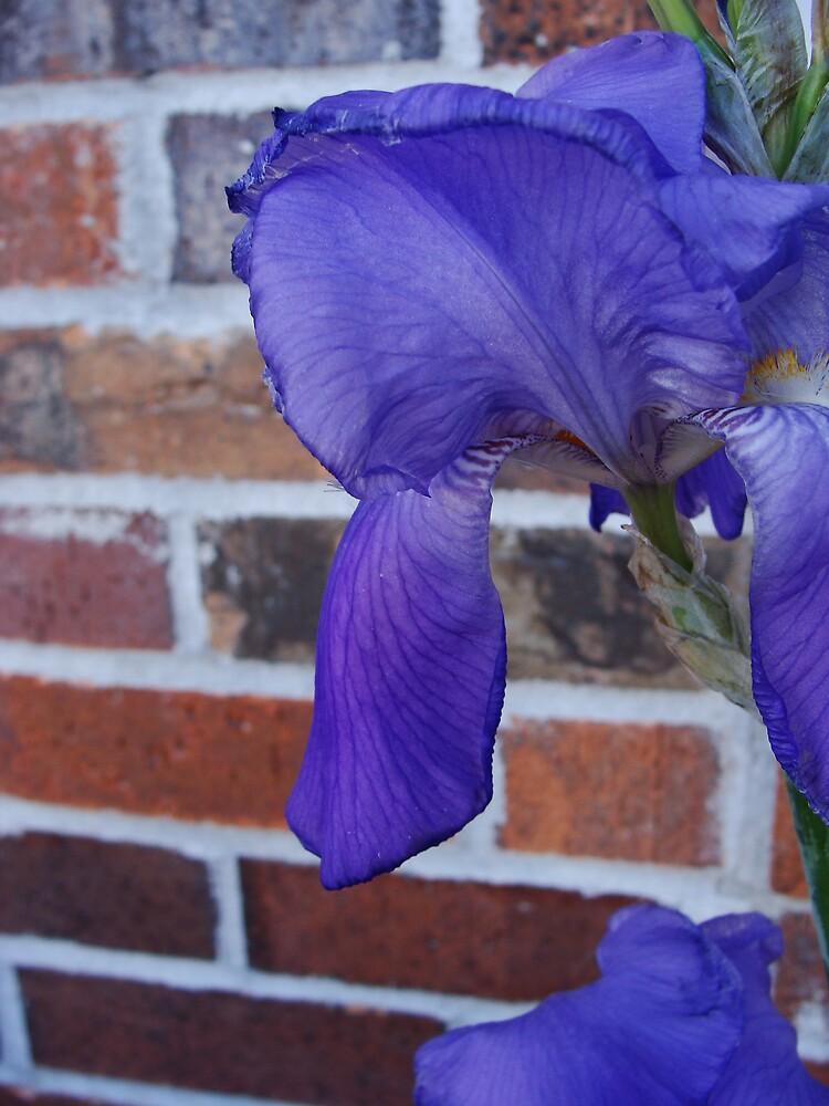 Wallflower by Blueccs