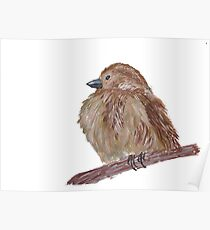 Hand drawn watercolor sparrow Poster