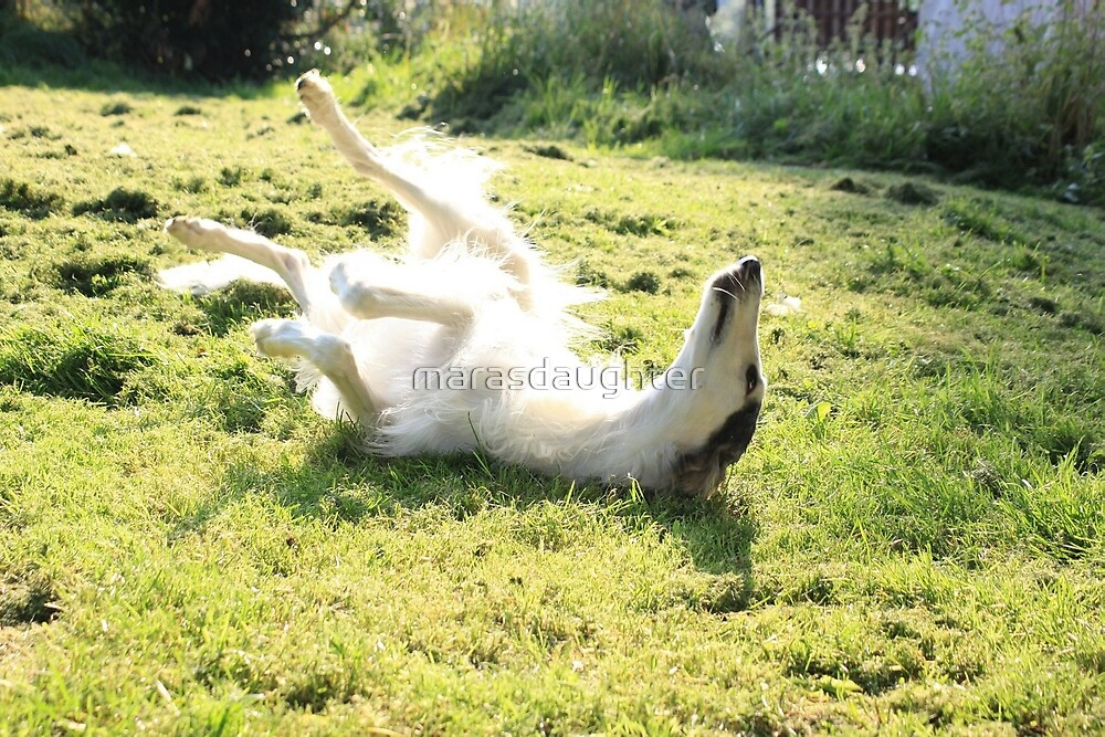 borzoi enjoying the sun by marasdaughter