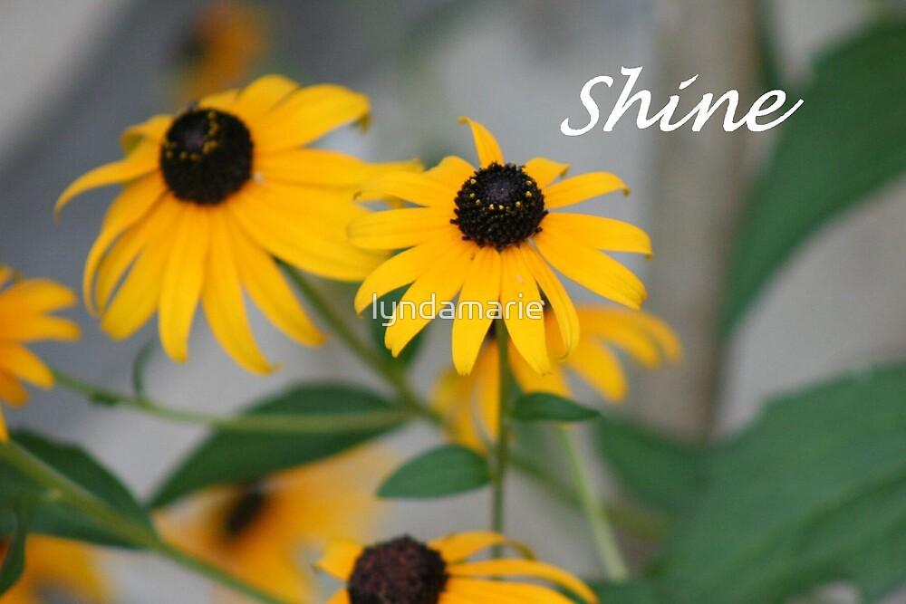Shine... by lyndamarie