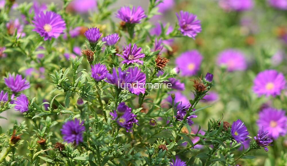Purple Passion by lyndamarie