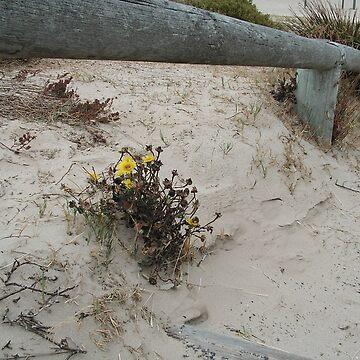 Sand Dune Flower by KeksWorkroom