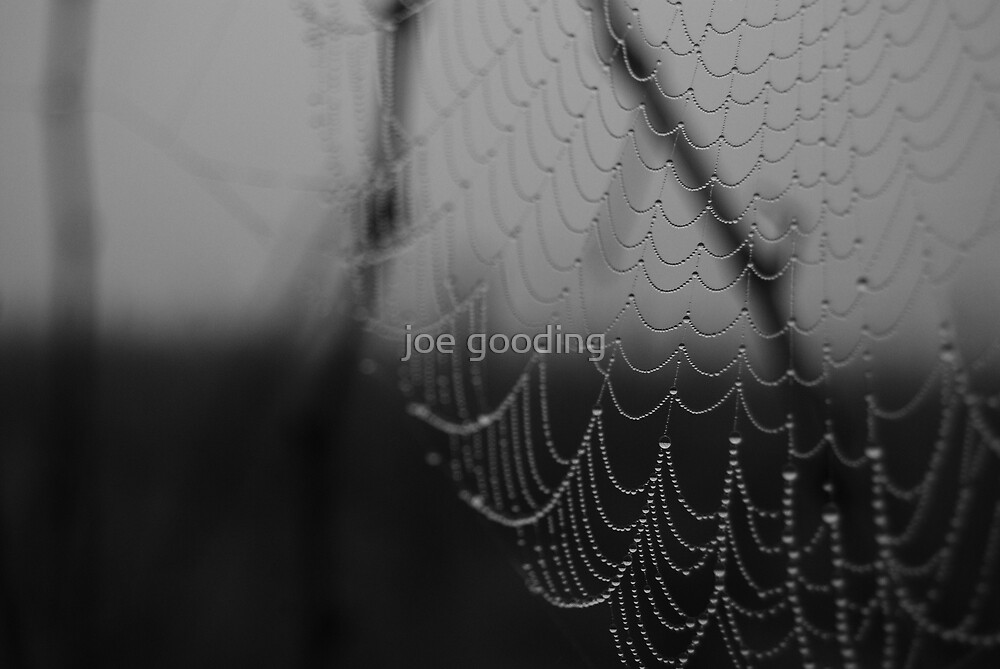 wet web III by joe gooding