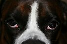 Arwen's Eyes  -Boxer Dogs Series- by Evita