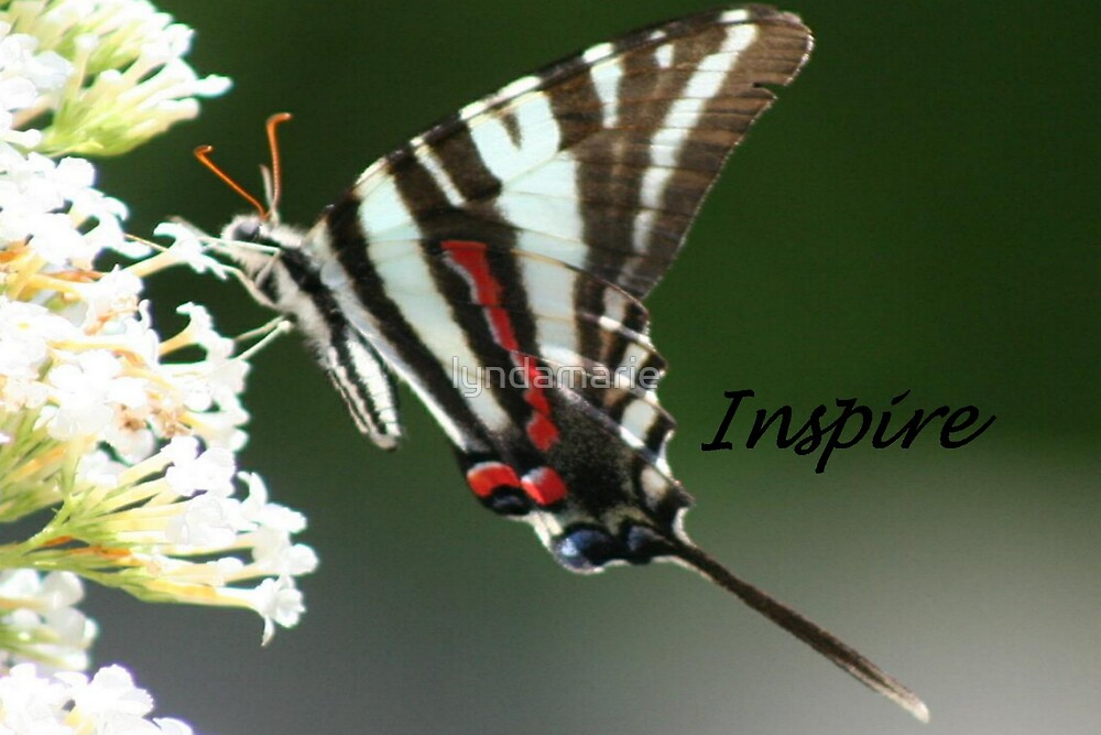 Inspire... by lyndamarie