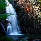 Tasmanien, Dip Falls von Angelika  Vogel