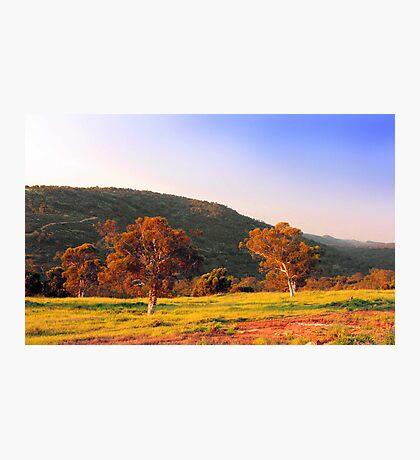 Swan Valley - Western Australia  Photographic Print