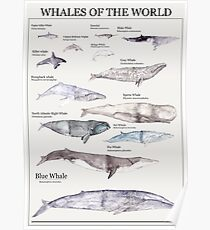 Whales of the World Poster