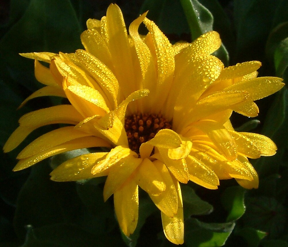 Yellow beauty by moix
