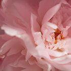 Soft Pink Petals by elm321