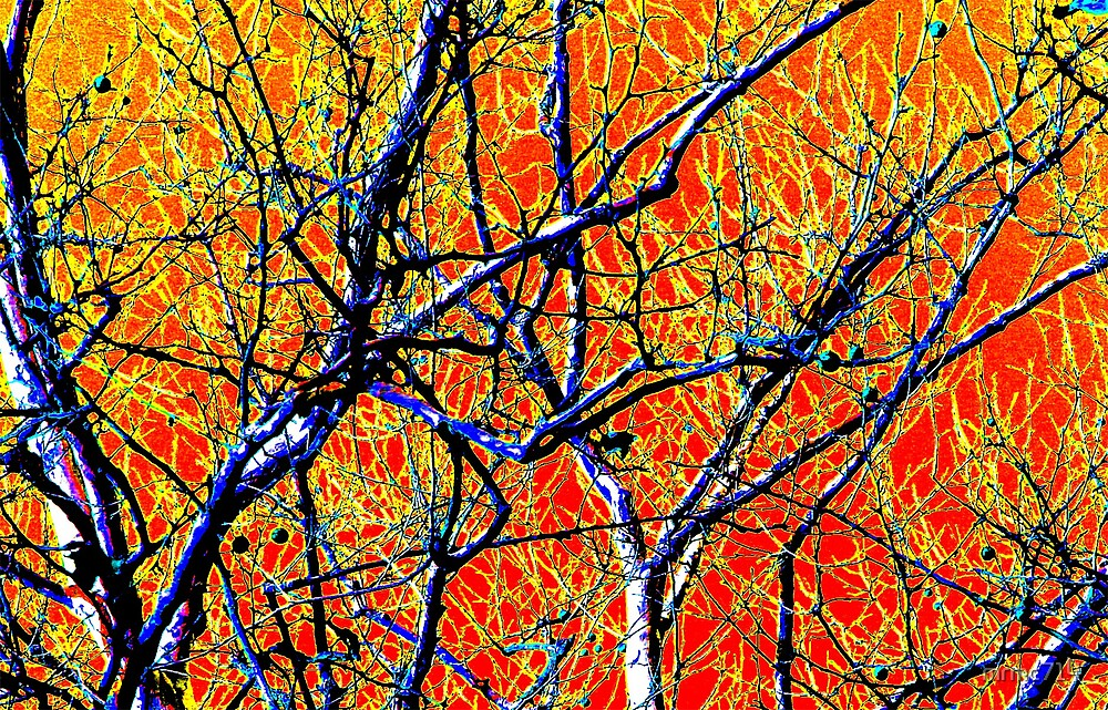 colored tree branches by mrmc714
