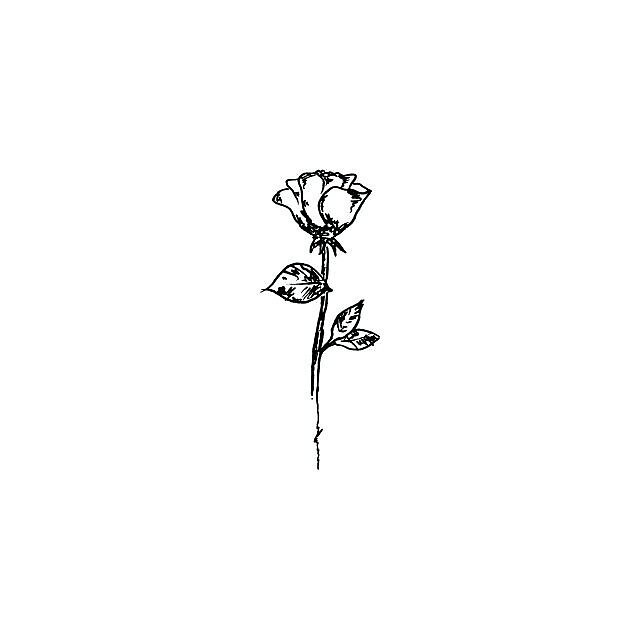 aesthetic rose  by twentyoneplots