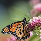Monarch 2017-5 by Thomas Young