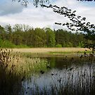 pond in the forest by dorka31