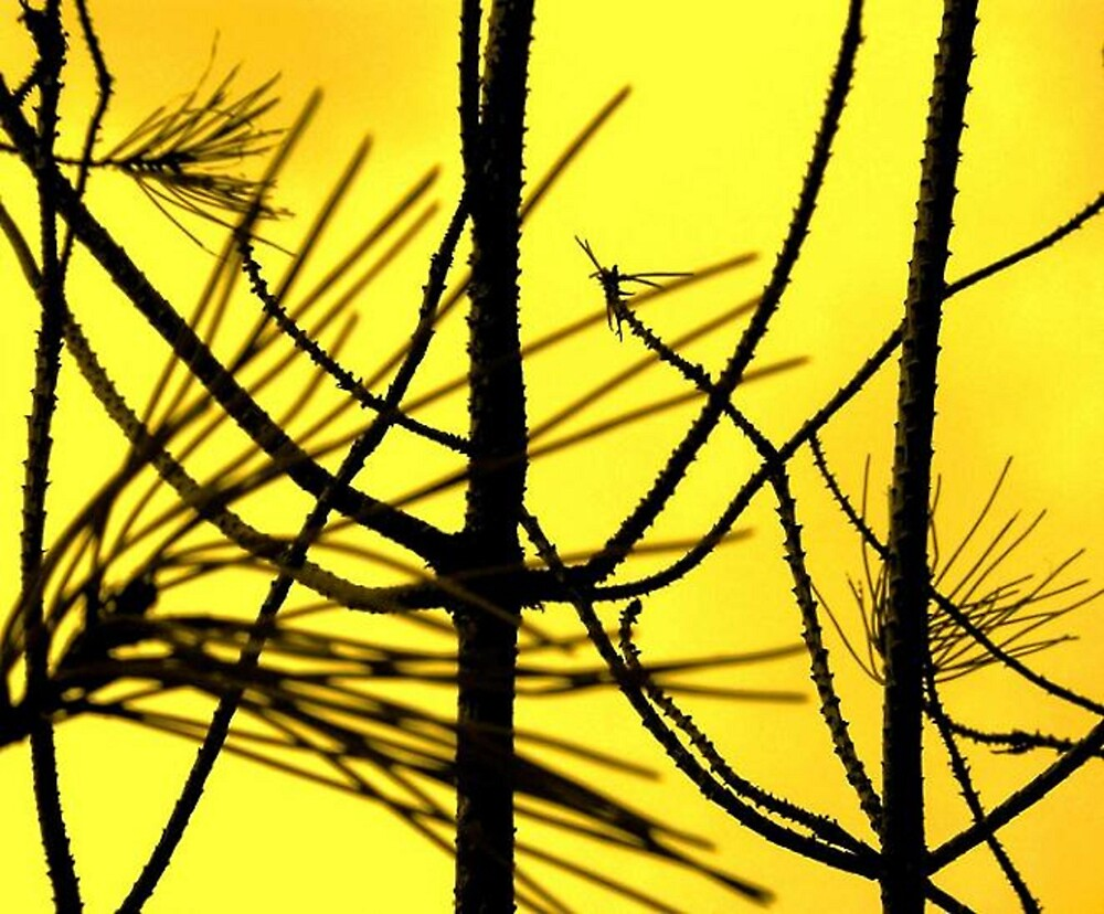 Bare branches by moix