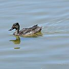 Freckled Duck (2691) by Emmy Silvius
