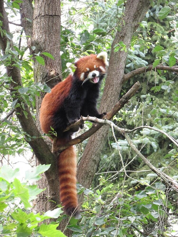 Red Panda by brooklevan