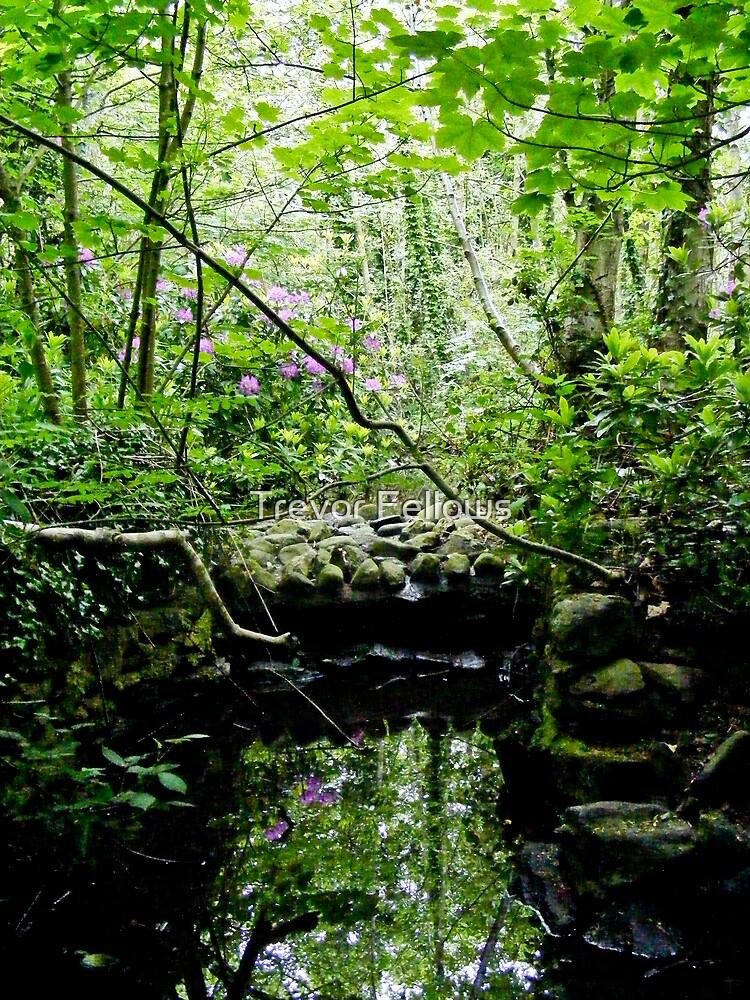 woodland pool by Trevor Fellows