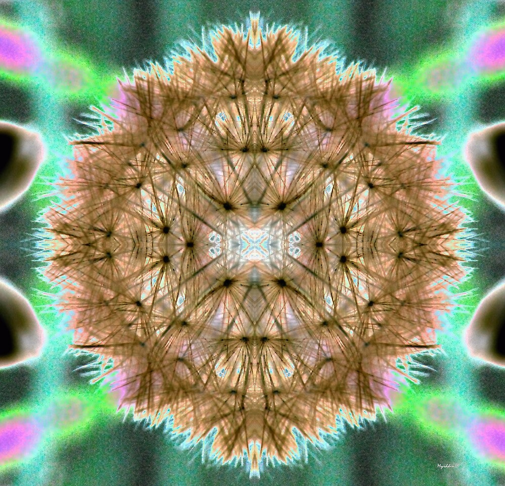 Dandelion Mandala by Myrddin