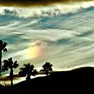 DesertPalms by Barbara  Brown