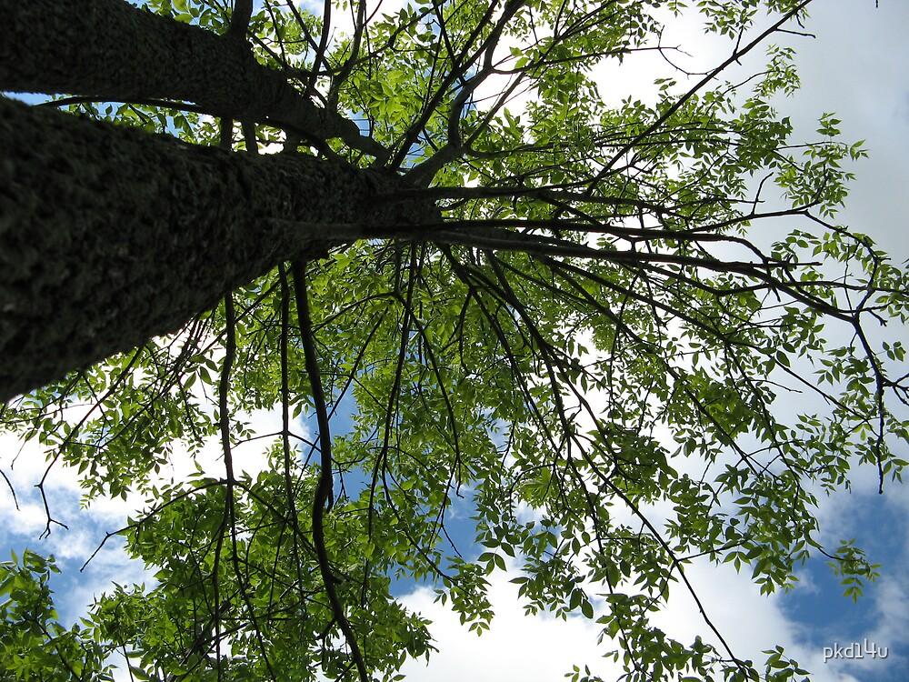 Tall Tree by pkd14u