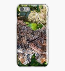 Red Admiral Butterflies Mating iPhone Case/Skin