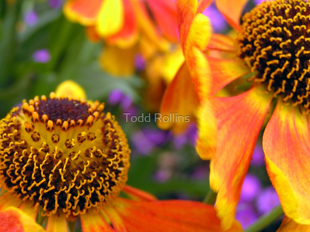 Candy Corn Colors. by Todd Rollins