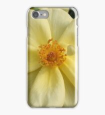 Soft Yellow Rose iPhone Case/Skin