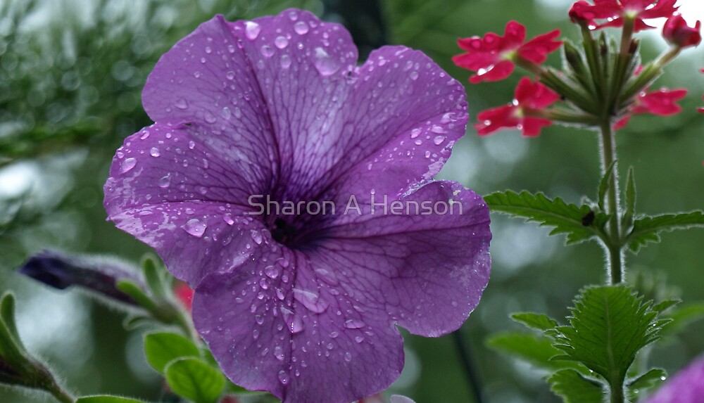 AFTER THE RAIN  #6 by Sharon A. Henson