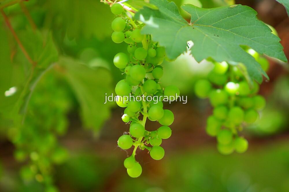 Grapevine by jdmphotography