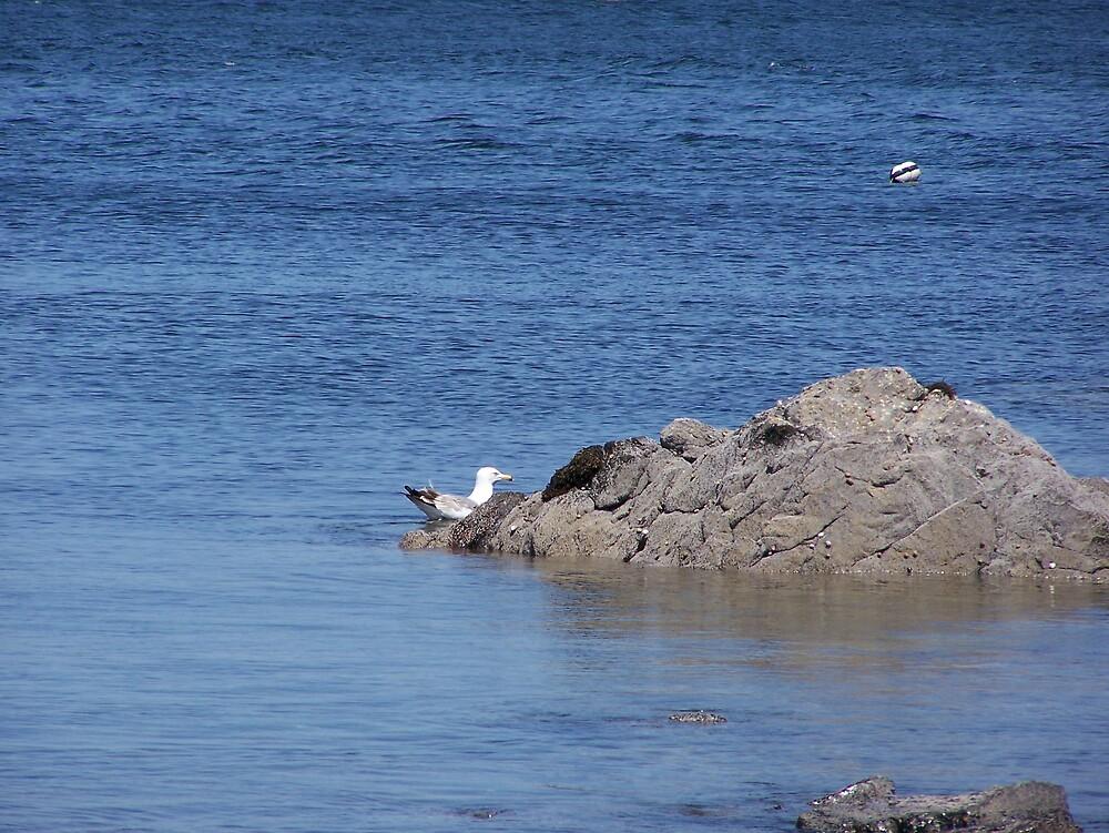 Sea Gull by Gene Cyr