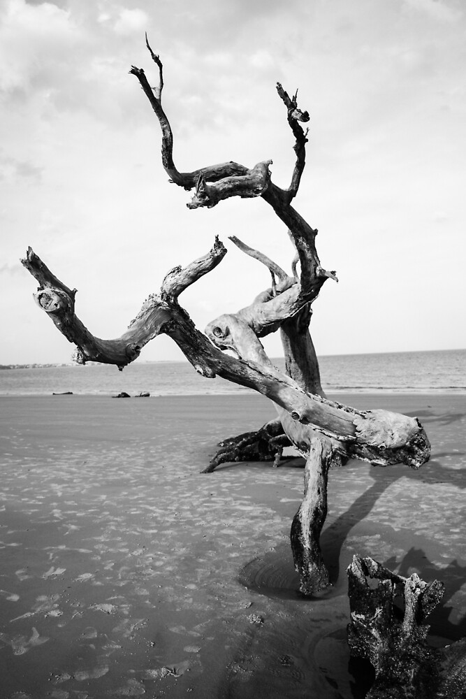 persistence of driftwood by James Parker Crumbly