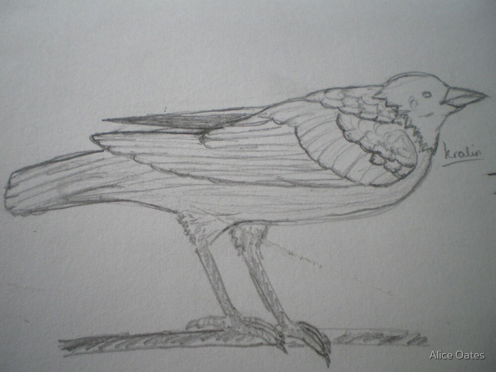 Crow by Alice Oates