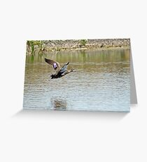 Pacific Black Duck (391) Greeting Card